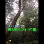 屋久島旅行記 ① – 縄文杉トレッキング 編 –