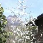 個室露天風呂付き由布院温泉心の宿風の森