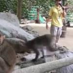 男一人旅 南九州一周【高崎山自然動物園(猿山)】