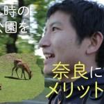 【ひとり旅】奈良公園に夕方行ったら、観光客がいなくてほぼ独り占めだった。