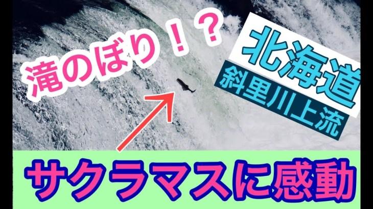 【北海道観光】サクラマスの滝のぼり 桜の滝へ行きました!!