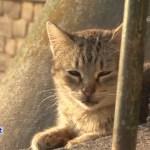World heritage Cat trip,Day8-Porto(4) / 世界遺産 猫旅 8日目-ポルト(4)
