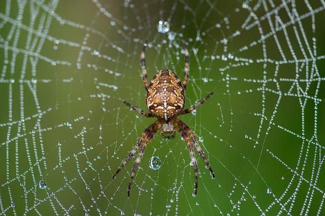 鬼蜘蛛 毒 強い 飼育 寿命 種類 天敵