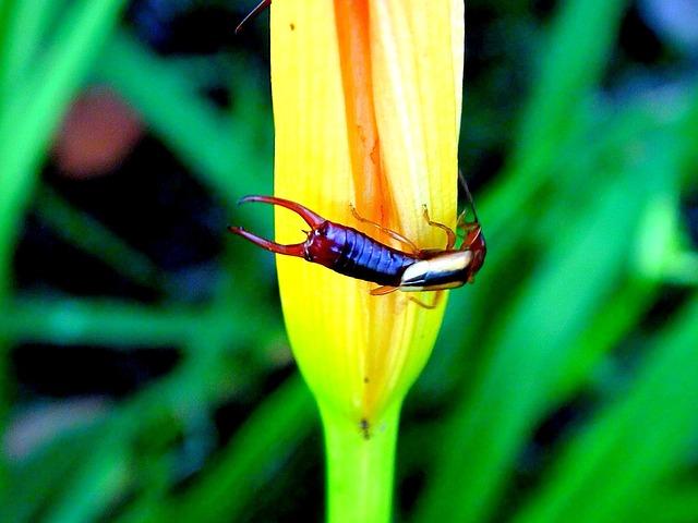 ハサミムシ 幼虫 害虫 駆除 毒