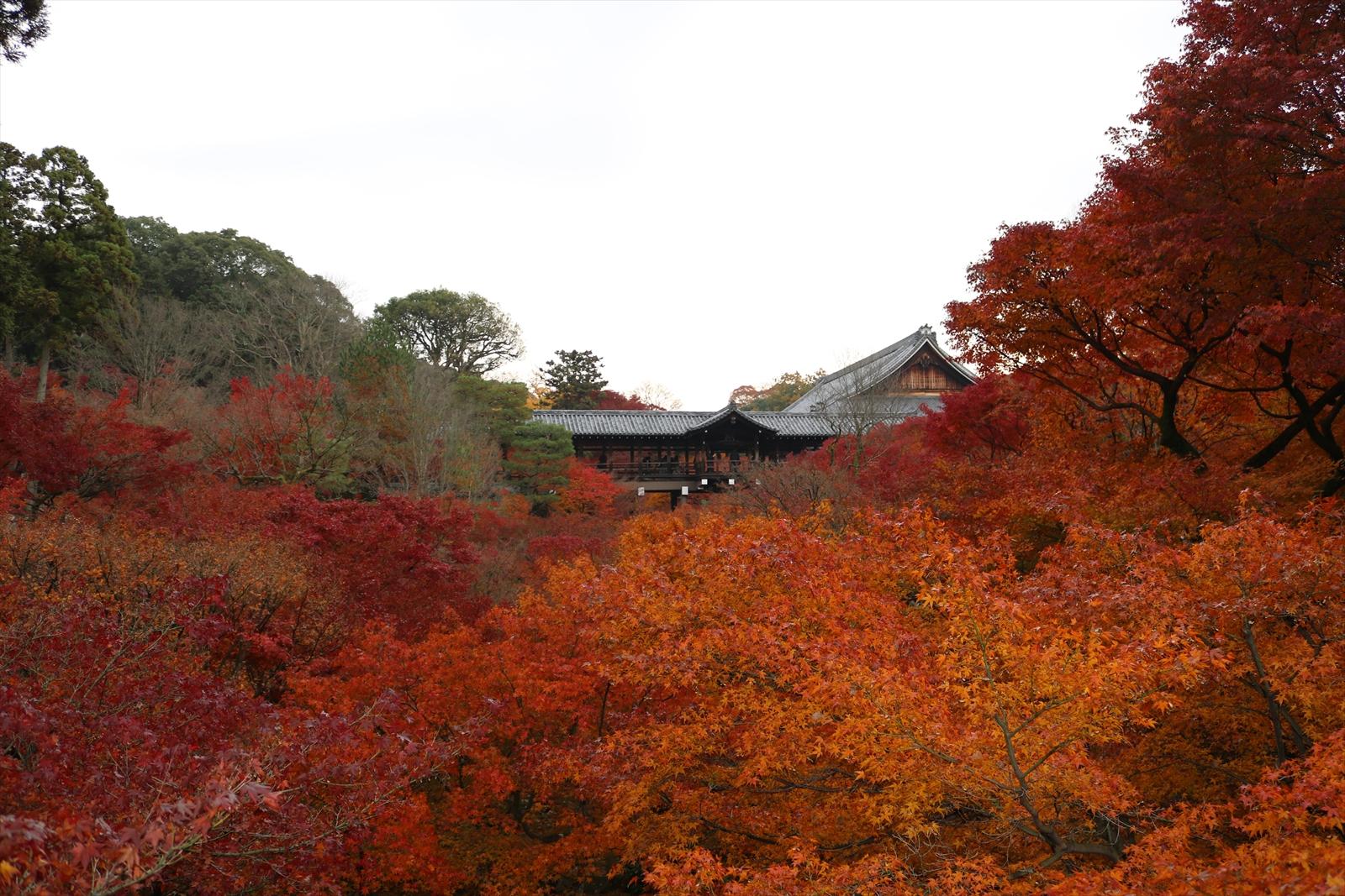 紅葉が綺麗な東福寺
