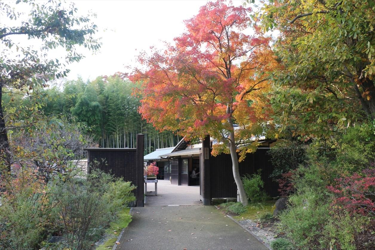 日本庭園 盆栽園