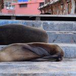 ガラパゴス諸島の旅行の費用と日程を紹介!行き方はこれで決まり!