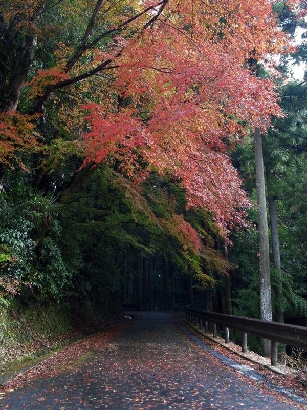 延命寺へ続く道