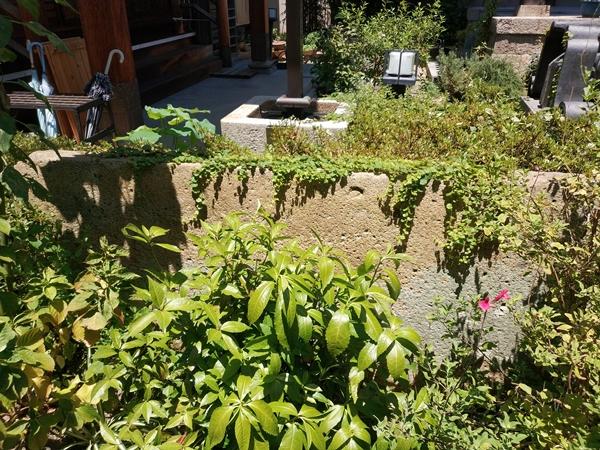 専念寺の庭石