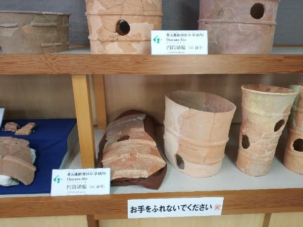 羽曳野市文化財展示室の円筒埴輪