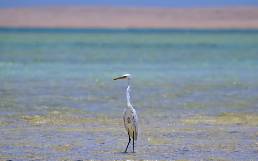 egipt egypt kite safari wildlife bird boat trip wyjazdy szkolenia progress camp natura