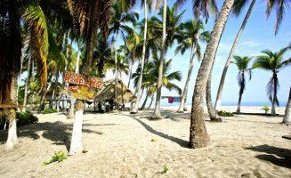Coconut Plantation Bliss