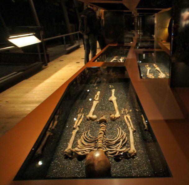 Skeletons from the Vasa ship