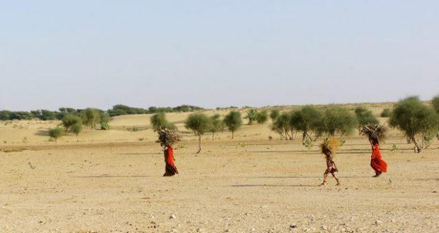 Indian women hard at work in the Thar Desert