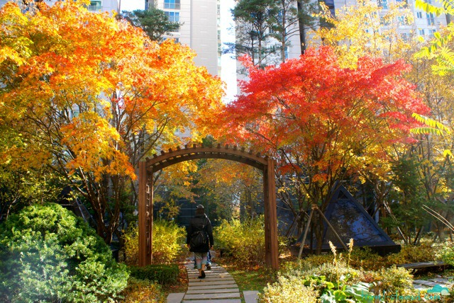 Autumn in Seoul: 7 Places to see Dazzling Fall Colour