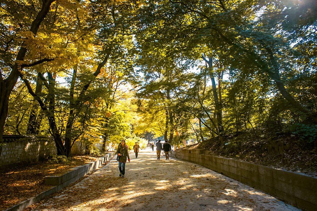 changdeokgung palace secret garden in autumn