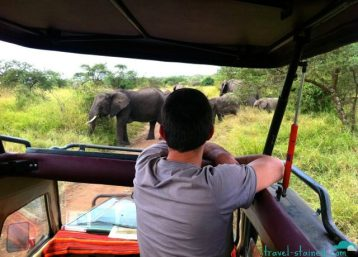 Oh, just some elephants in the Serengeti