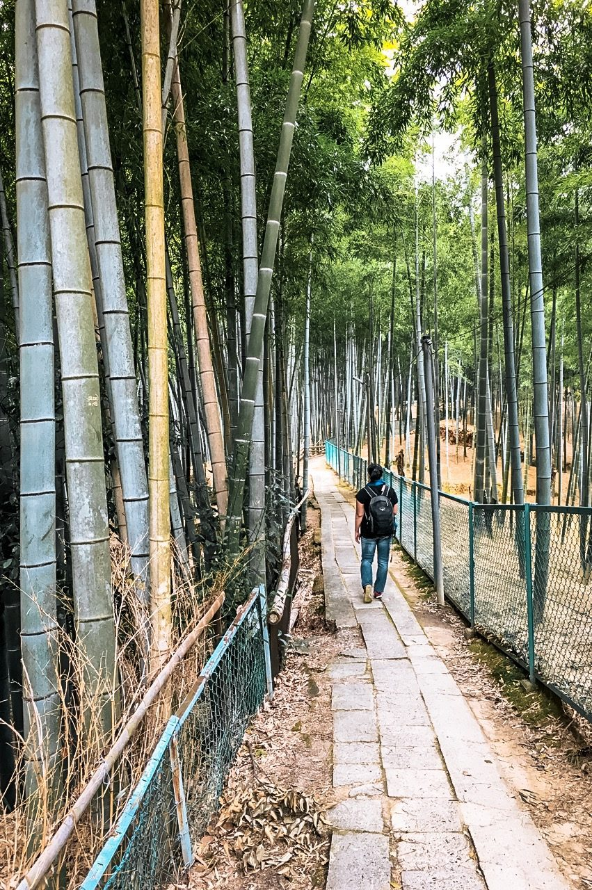 bamboo trees fushimi inari japan
