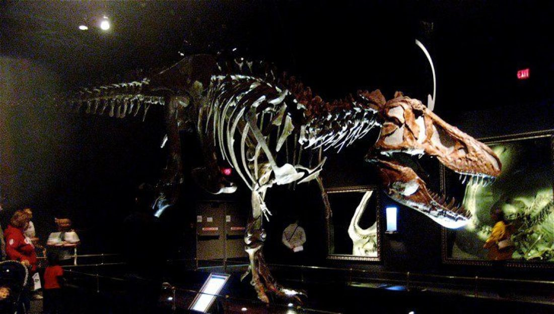 Things to do in Drumheller -Royal Tyrrell Museum