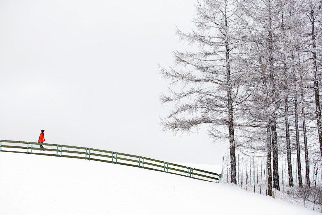 daegwallyeong sheep farm in winter
