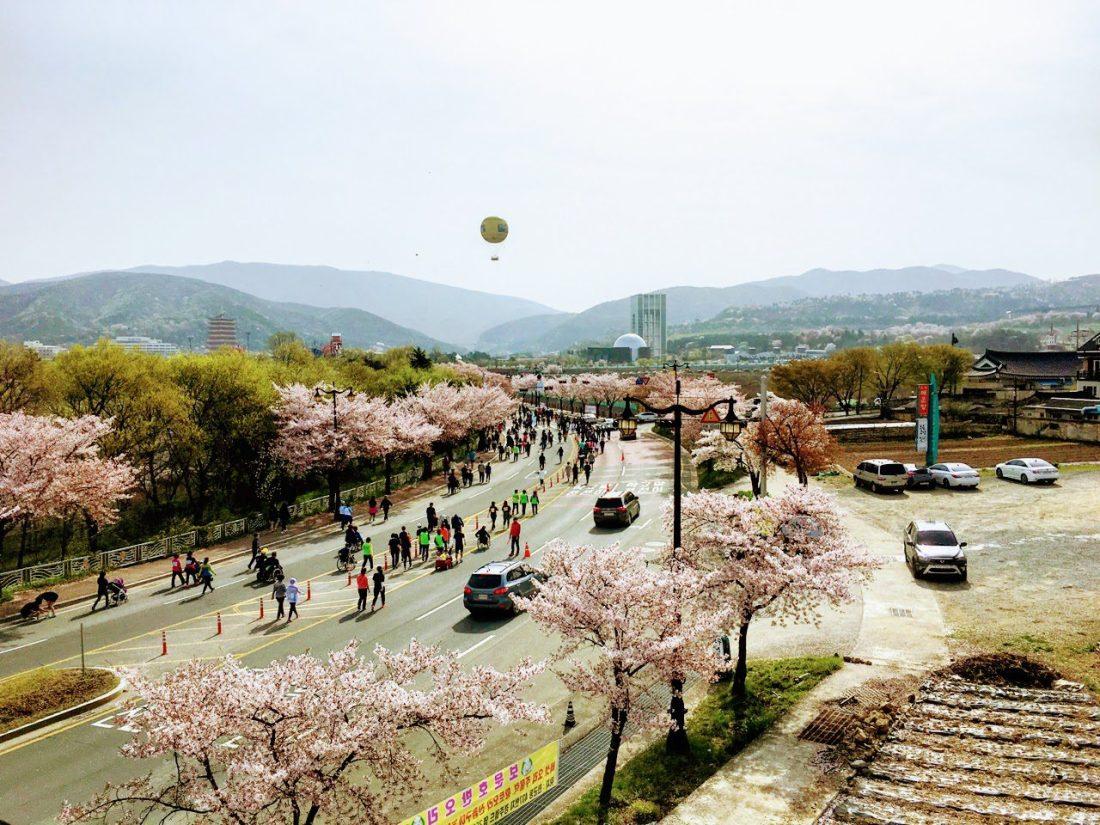 gyeongju cherry blossom marathon in korea in april