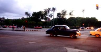 ハバナの椰子とクラシックカー