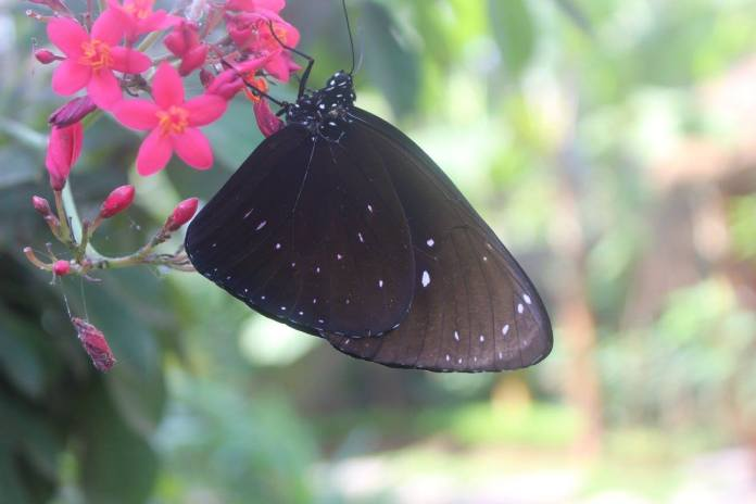 For more of a relaxing experience, head over to the recently-opened Kemenuh Butterfly Park. Image: https://www.facebook.com/Kemenuh-Butterfly-Park-443035885896798/