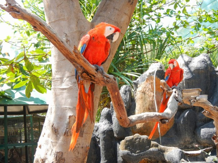 Gili Meno is perfect for those that can't get enough of Bali's tropical birdlife, Image: http://www.berbagifun.com/