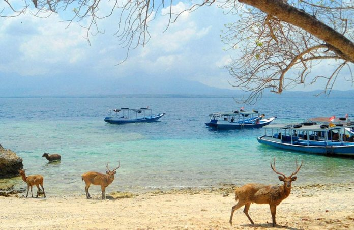 West Bali National Park -where else in the world can you see deer paddling in the ocean? Image: http://www.balibookingonline.com/