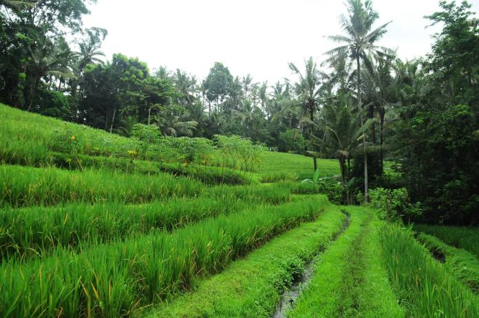 Bali's interior forms a stark contrast to the coast, and is blanketed with tea plantations, rice paddies and bamboo villages. Image: facebook.com/balihomestayprogram
