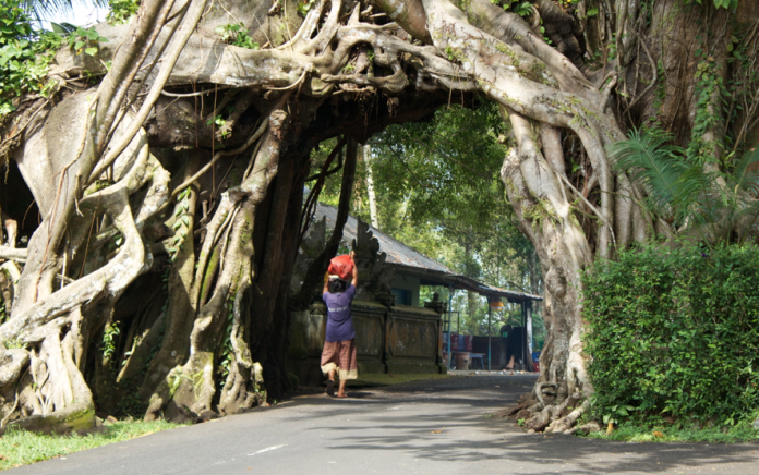 off the beaten track in Bali