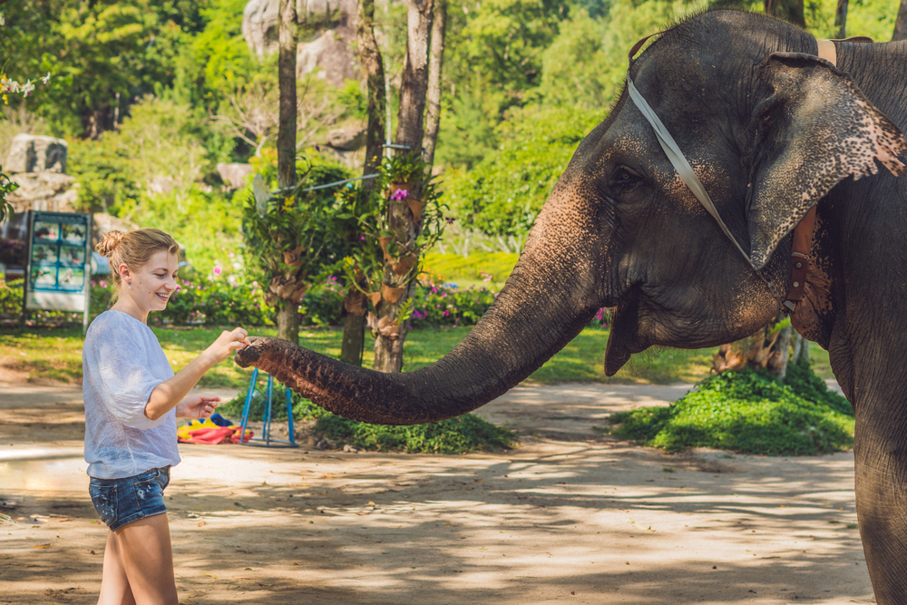 Elephant care center, sustianable tourism thailand, chiang mai