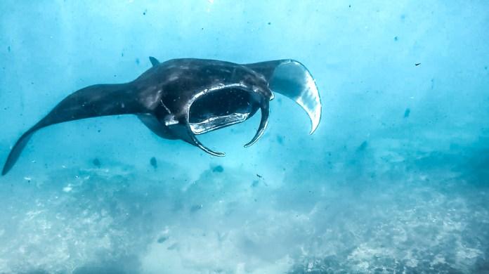 top diving spots in bali