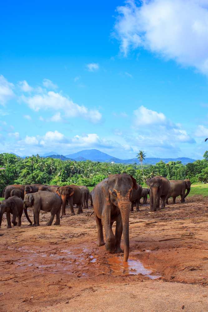 10 pictures that will inspire you to travel sri lanka