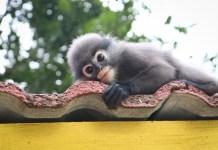 most adorable animals in sri lanka