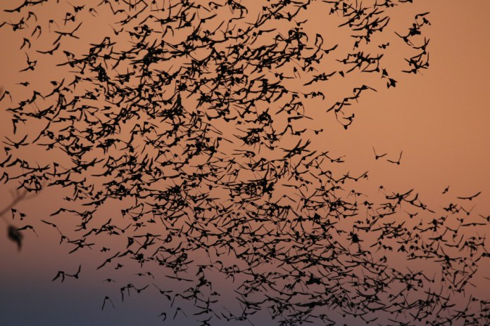 """Nightly bat flights are one of the best """"shows"""" to admire in Thailand this summer :)"""