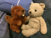 Ursula, being a sociable bear, has a tendency to make friends when we travel
