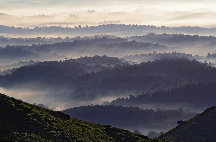 Image result for coorg photography