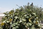 <h5>Bird scaring tactics! How inventive!</h5>