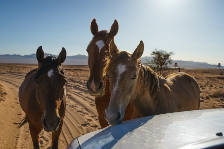 A family of wild horses came to our car to greet us to the Gondwana Collection Aus-Klein Hotel and Campsite.