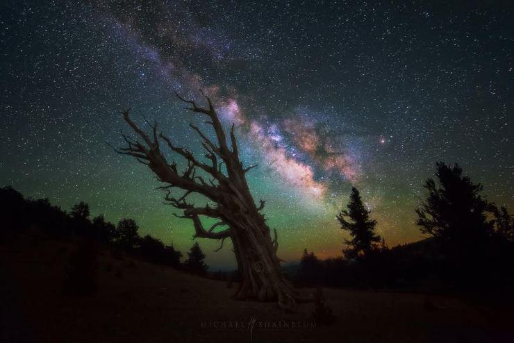 Michael Shainblum Milky Way Eastern Sierras Bristlecone Pine Forest California