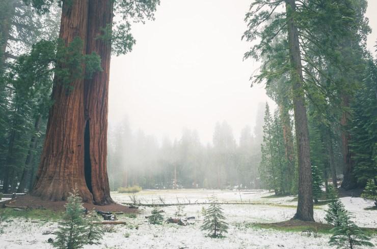 05-sequoia-01