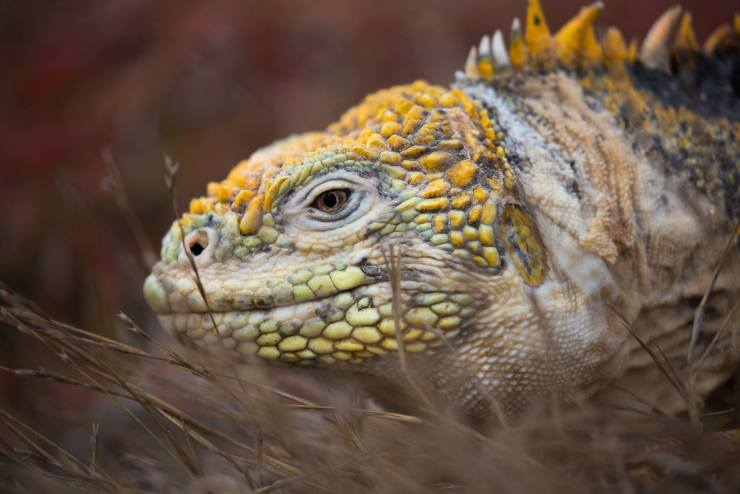 Brendan Van Son Galapagos Islands Ecuador 9