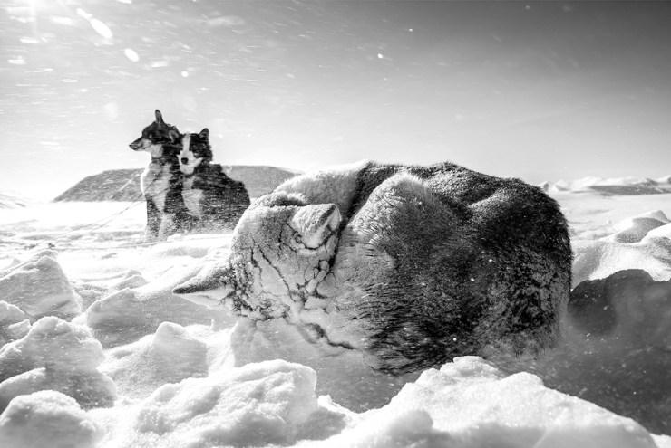Svalbard 19