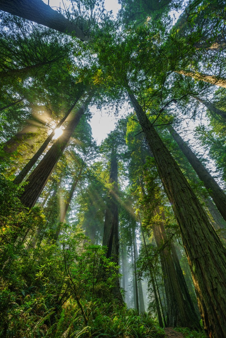 Redwood-National-Park-Michael-Bonocore