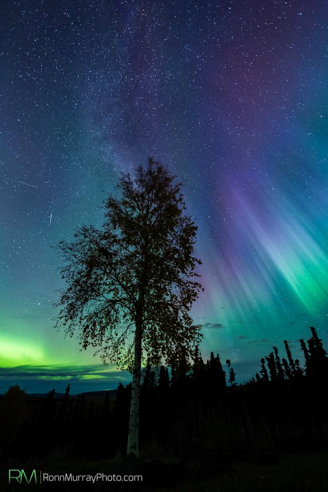 Ronn Murray Northern Lights Alaska Film