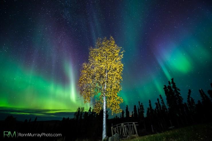 Ronn Murray Northern Lights Alaska Film 6