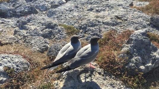 gulls-header