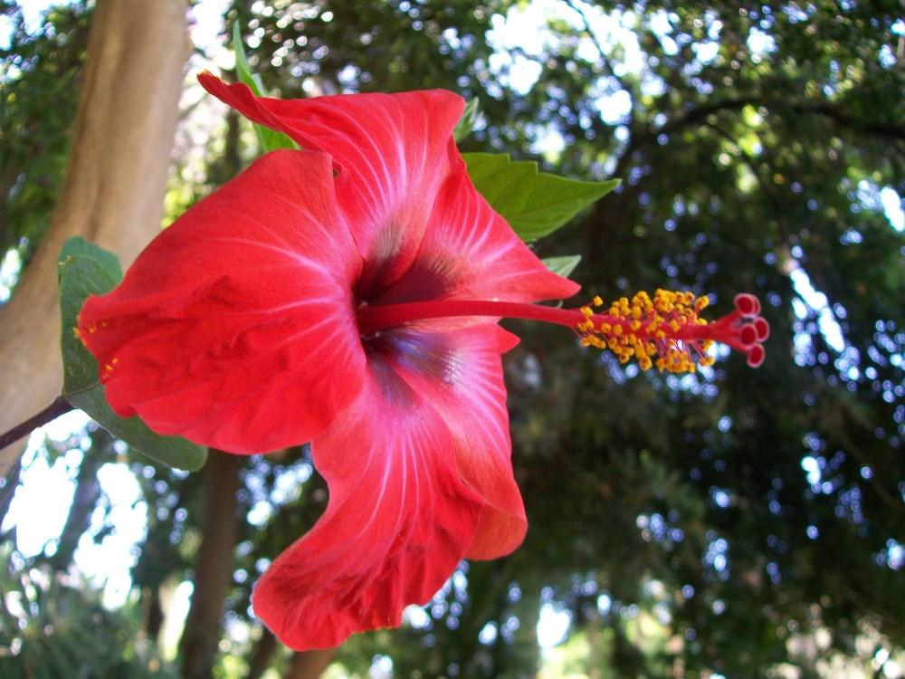 Faro, Portugal, Botanical Gardens Photos (4/6)