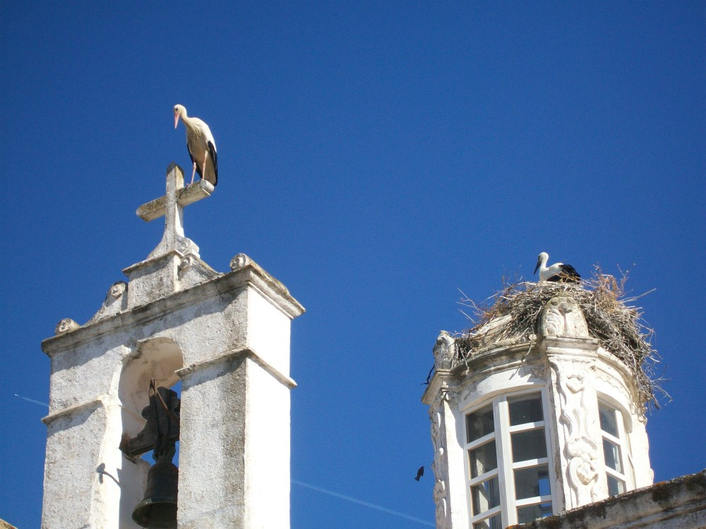 Storks of Faro, Portugal Photos (5/6)